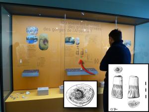 Musée d'Orgnac